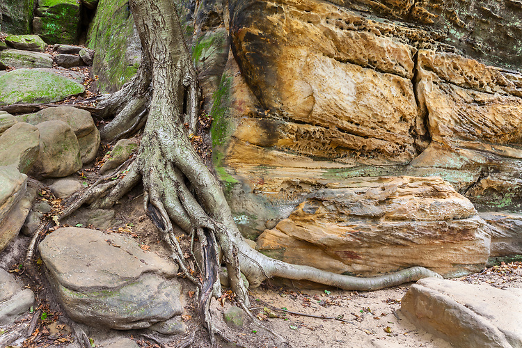 Erosion patterns at The Ledges; Cuyahoga Valley National Park, OH