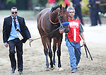 May 16, 2015: American Pharoah leads the walkover from the barn before the Preakness Stakes. American Pharoah, Victor Espinoza up,  wins the Preakness Stakes at Pimlico Race Course in Baltimore, MD. Trainer is Bob Baffert; owner is Ahmed Zayed. Joan Fairman Kanes/ESW/CSM