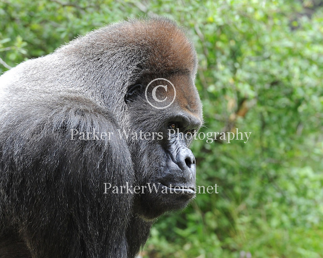 A few scenes from Audubon Zoo in New Orleans on Mothers Day.