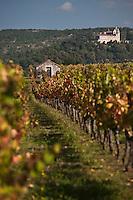 Europe/Europe/France/Midi-Pyrénées/46/Lot/Caillac: le vignoble AOC Cahors à l'automne et  le Château de Mercués