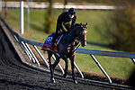 November 2, 2020: Miss Amulet, trained by trainer Ken Condon, exercises in preparation for the Breeders' Cup Juvenile Fillies Turf at  at Keeneland Racetrack in Lexington, Kentucky on November 2, 2020. Alex Evers/Eclipse Sportswire/Breeders Cup