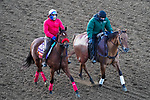 November 3, 2020: Lady Prancealot, trained by trainer Richard Baltas, exercises in preparation for the Breeders' Cup Filly & Mare Turf at Keeneland Racetrack in Lexington, Kentucky on November 3, 2020. John Voorhees/Eclipse Sportswire/Breeders Cup/CSM