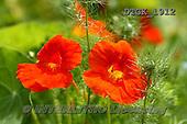 Gisela, FLOWERS, BLUMEN, FLORES, photos+++++,DTGK1912,#f#