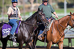 OCT 29 2014:Leigh Court, trained by Josie Carroll, exercises in preparation for the Breeders' Cup Filly & Mare Sprint at Santa Anita Race Course in Arcadia, California on October 29, 2014. Kazushi Ishida/ESW/CSM