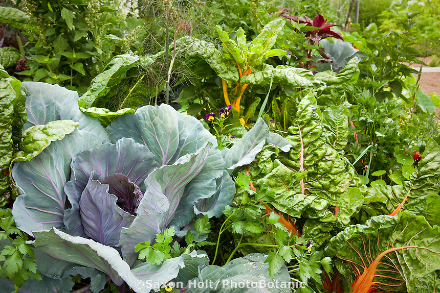 Vegetables (cabbage, chard) in mixed garden bed; Lynmar Estate Winery