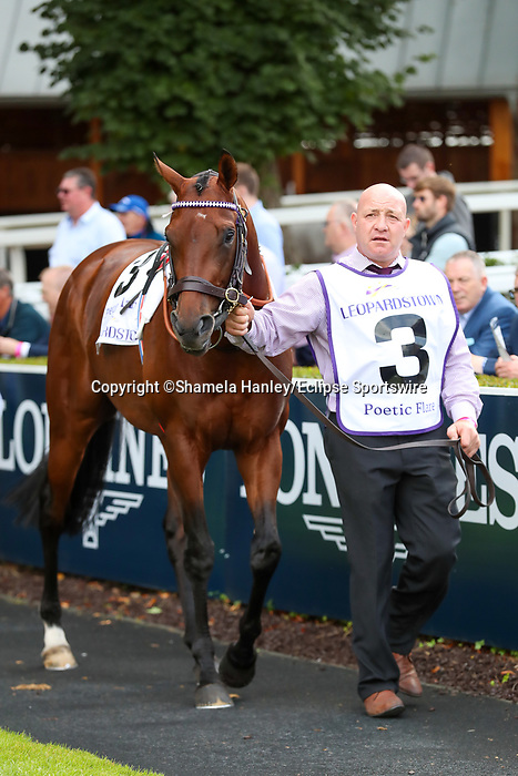 September 11, 2021: Poetic Flare (GB) #3 in the walking ring prior to the Group 1 Irish Champion Stakes on the turf on Irish Champions Weekend at Leopardstown Racecourse in Dublin, Ireland on September 11th, 2021. Shamela Hanley/Eclipse Sportswire/CSM