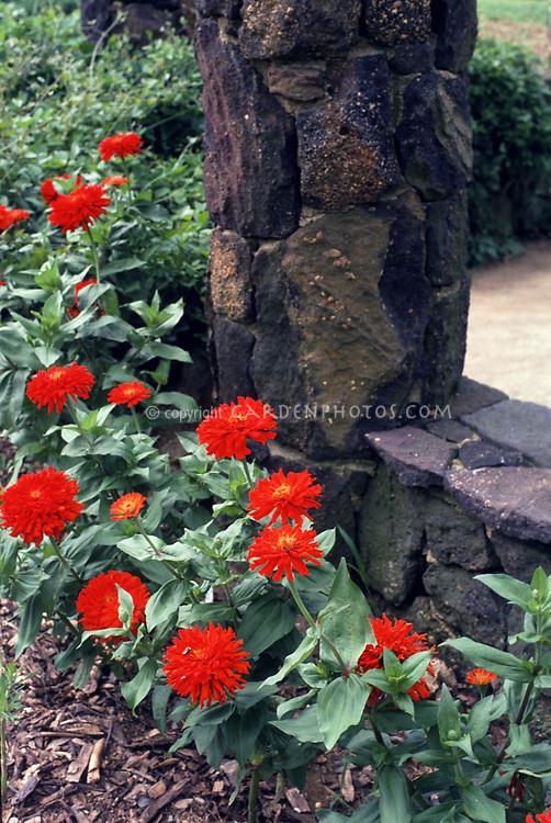 Red zinnias next to stone pillar