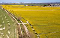 BNPS.co.uk (01202) 558833. <br /> Pic: CorinMesser/BNPS<br /> <br /> Rapeseed oil fields coming into bloom near the Kingston Lacy Estate in Dorset.