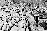 Switzerland. Canton Valais. Belalp. At the end of the season spent by sheeps in mountain pastures, the animals are brought back to Belalp. A young shepherd and his girlfriend stands on a ston wall. Swiss alpine farmers. Alps mountains peasants.© 1996 Didier Ruef