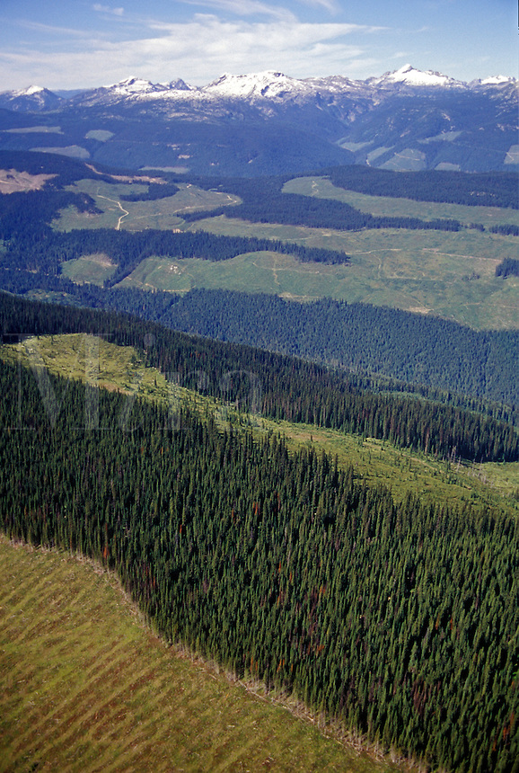 Extensive clearcut logging viewed from aerial perspective.   South-east British Columbia, Canada
