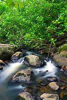 The flowing river surrounded by lush foliage near Hawi, Hawai'i Island.