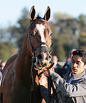 LEXINGTON, KY - OCTOBER 22: #12 Lightstream and jockey Julien Leparoux after winning the 18th running of The Lexus Raven Run Grade 2 $250,000  at Keeneland Race Course for owner Up Hill Stable and Head of Plains Partners and trainer Brian Lynch.  October 22, 2016, Lexington, Kentucky. (Photo by Candice Chavez/Eclipse Sportswire/Getty Images)