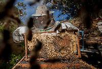 Abelhas Tecnológicas.<br />  <br /> Em Santa Bárbara, no Pará, uma pesquisa desenvolvida por brasileiros e australianos quer saber por que esses insetos estão desaparecendo. Seu sumiço está relacionado com a produção de alimentos em escala global. Para descobrir o motivo do sumiço desses importantes polinizadores, desenvolveram um microsensor menor que um grão de arroz para rastreá-las.<br /> Criado chip  para monitorar desaparecimento de abelhas.<br /> <br /> A população de abelhas registra um expressivo declínio em vários países, inclusive no Brasil, Na busca por respostas que ajudem a combater o problema, o Instituto Tecnológico Vale (ITV), em Belém, no Pará, desenvolveu em colaboração com a Organização de Pesquisa da Comunidade Científica e Industrial (CSIRO), na Austrália.<br /> <br /> Santa Bárbara, Pará, Brasil<br /> Foto Carlos Borges<br /> 31/05/2014