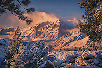 Soft morning light on Mt. Tom after a snowfall in the Sierra Mountains.
