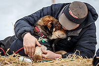 Nathan Schroeder massages one of his dogs shoulders at the Takotna checkpoint during Iditarod 2016.  Alaska.  March 09, 2016.  <br /> <br /> Photo by Jeff Schultz (C) 2016  ALL RIGHTS RESERVED