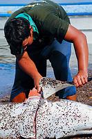 Shark finning, Mako shark, Isurus oxyrinchus, Sea of Cortez, Mexico, Pacific Ocean