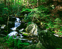 LeConte Creek Great Smoky Mountains National Park Tennessee