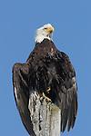 Birds, Oregon