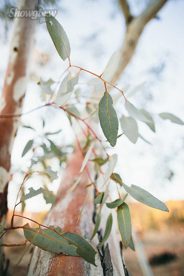 Image Ref: CA631<br /> Location: Alice Springs<br /> Date of Shot: 09.09.18