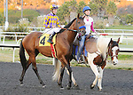 Candy Boy (no. 4), ridden by Gary Stevens and trained by John Sadler, in the post parade before competing in the 33rd running of the grade 1 CashCall Futurity Stakes for two year olds on December 14, 2013 at Hollywood Park in Inglewood, California.  (Bob Mayberger/Eclipse Sportswire)