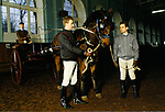 Training horses in the Royal Mews, Buckingham Palace, this horse will be used for carriage driving. 1991 1990s London UK