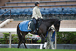 SHA TIN,HONG KONG-APRIL 29: Lovely Day ,trained by Yasutoshi Ikee,exercises in preparation for the Champions Mile at Sha Tin Racecourse on April 29,2016 in Sha Tin,New Territories,Hong Kong (Photo by Kaz Ishida/Eclipse Sportswire/Getty Images)