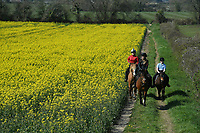 BNPS.co.uk (01202) 558833.<br /> Pic: ZacharyCulpin/BNPS<br /> <br /> Weather input<br /> <br /> Hot to trot - Horse riders make the most of the warm spring weather and gently trot next to a stunning yellow rape seed field near Christchurch in Dorset today (Sunday).