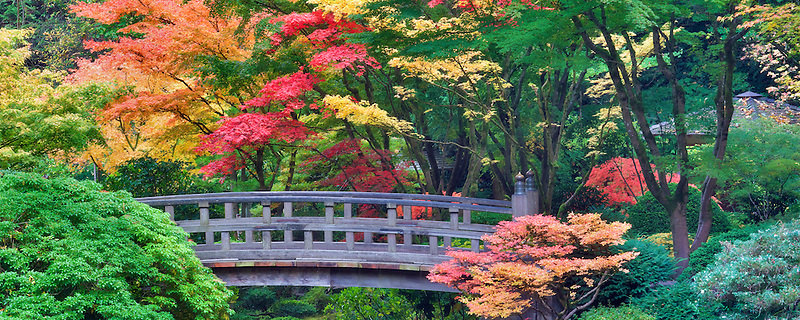 Portland Japanese Gardens with bridge and fall colors. Oregon