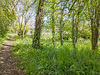 BNPS.co.uk (01202) 558833. <br /> Pic: Stags/BNPS<br /> <br /> Pictured: The original railway track has been removed and is now laid to lawn, which leads to a stone bridge and a large pond with lots of wildlife, making it a site of Special Scientific Interest.<br /> <br /> Pictured: Station Halt was the station for Brampford Speke in Devon on the Exe Valley Railway line until it closed as part of the Beeching cuts in 1963.<br /> <br /> Just the ticket...<br /> <br /> A converted railway station with an old train carriage in the garden - on the market for offers over £550,000 - is the perfect home for train enthusiasts.<br /> <br /> Station Halt was the station for Brampford Speke in Devon on the Exe Valley Railway line until it closed as part of the Beeching cuts in 1963.<br /> <br /> The 136-year-old building was converted shortly after and is now a pretty three-bedroom bungalow with original features including the waiting room fireplace, ticket office window and the old train platform.<br /> <br /> There is even an old train carriage in the 6.2-acre gardens that could be converted and earn income as a holiday rental.