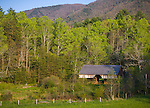 "Great Smoky Mts. National Park, TN/NC<br /> Cantilever barn seen amid the spring hardwood forest at ""The Tipton place"" farm site in Cades Cove"
