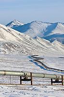Trans Alaska oil pipeline in Atigun Canyon of the Brooks Range, Arctic, Alaska.