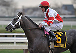 29 November 2008: Ramon Dominguez and Old Fashioned return to the winner's circle following an easy wire to wire victory in the grade 2 Remsen Stakes at Aqueduct Racetrack in Ozone Park, New York.