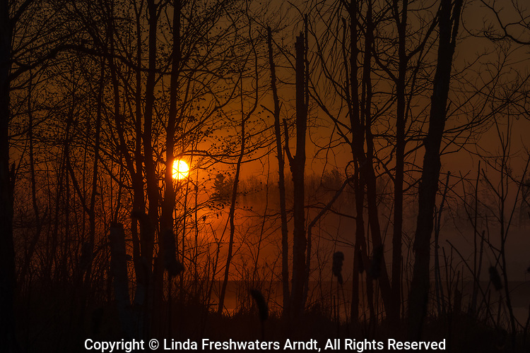 A misty sunrise on a wetland in northern Wisconsin.