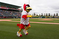 Louie, the Springfield Cardinals mascot, runs on the field prior to a game against the Tulsa Drillers at Hammons Field on May 4, 2013 in Springfield, Missouri. (David Welker/Four Seam Images)