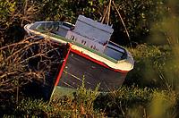 Iles Bahamas /Ile d'Andros/South Andros: vieux canot dans la Mangrove prés de la plage de l'Eco-Lodge-Tiamo-Resort