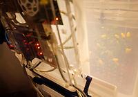 Un ecosistema robotico alla Maker Faire, mostra sull'innovazione tecnologica, a Roma, 4 ottobre 2014.<br /> A robotic ecosystem displayed at the Maker Faire exhibition on technological innovation in Rome, 4 October 2014.<br /> UPDATE IMAGES PRESS/Riccardo De Luca