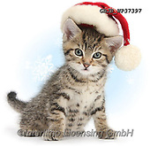 Kim, CHRISTMAS ANIMALS, WEIHNACHTEN TIERE, NAVIDAD ANIMALES, photos+++++,GBJBWP37397,#xa#