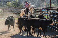 Arizona cowgirl roping cattle from horseback Cowboy Cowboy Photo Cowboy, Cowboy and Cowgirl photographs of western ranches working with horses and cattle by western cowboy photographer Jess Lee. Photographing ranches big and small in Wyoming,Montana,Idaho,Oregon,Colorado,Nevada,Arizona,Utah,New Mexico. Fine Art Limited Edition Photography Of American Cowboys and Cowgirls by Jess Lee