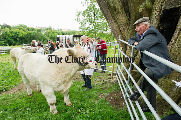 M.D. Looney of Lahinch keeping an eye on the stock judging during the North West Clare Show on the grounds of The Falls Hotel at Ennistymon. Photograph by John Kelly.