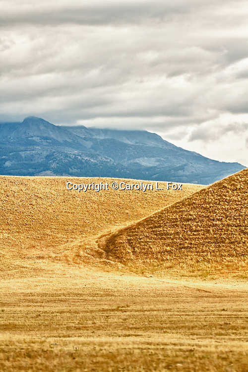 Golden ground and blue mountains create a pretty scene.