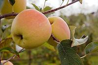 Agriculture - Pommes du Limousin