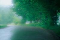 Rainy day in Warren VT.