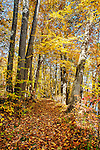 A pathway through the forest beside Lake Massawippa, Orange County, NY