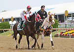 May 16, 2015: Sandbar, Joel Rosario up, take part in the post parade before winning the grade III Maryland Sprint Handicap at Pimlico Race Course in Baltimore, MD. Joan Fairman Kanes/ESW/CSM