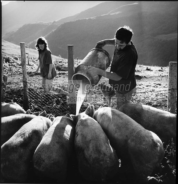 Europe/France/Auvergne/15/Cantal/Massif du Puy Mary : Aprés avoir préparé le fromage de Salers,Cantal,Daniel Reygade  donne le petit lait à ses cochon  Buron du Col de Rombière -Parc Naturel Régional des Volcans d'Auvergne