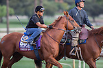OCT 26 2014: Sweet Swap,trained by John Sadler, exercises in preparation for the Breeders' Cup Turf Sprint at Santa Anita Race Course in Arcadia, California on October 26, 2014. Kazushi Ishida/ESW/CSM