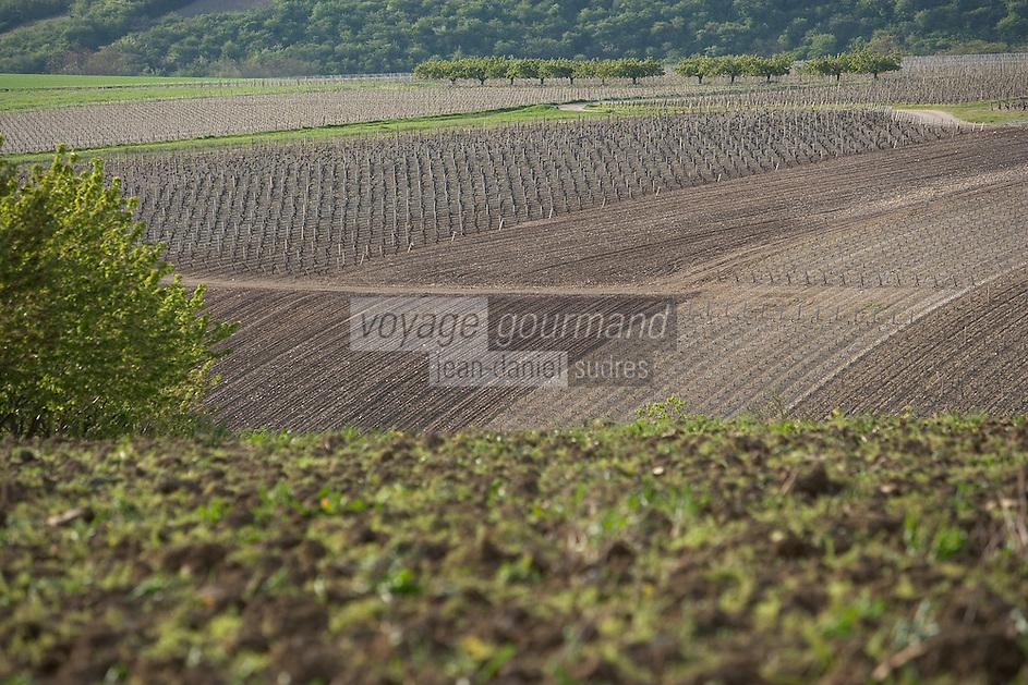 Europe/France/Bourgogne/89/Yonne/Irancy: Paysage du vignoble d'Irancy et vallée de l'Yonne au printemps