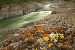 Several varieties and colors of lichen grow on the rocky shores of the Firth River, Ivvavik National Park, Canada.