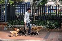 CHINA, Megacity Hong Kong, Kowloon, pedestrian with five dogs