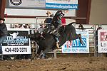 SEBRA - Chatham, VA - 3.9.2019 - Bulls & Action